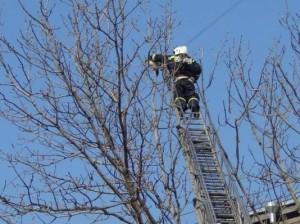 Пожарные спасли кота с помощью 30-метровой лестницы