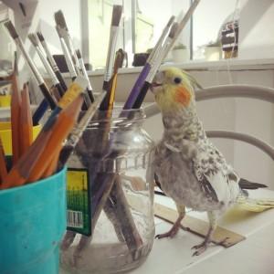 Любопытно о попугаях