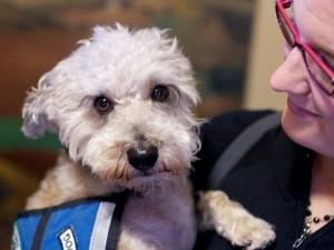 Собаки-сиделки: предупреждение о припадках