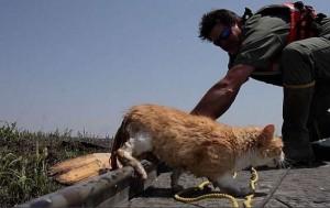 Команда, наблюдающая за популяцией азиатских карпов, спасла кота в зоне наводнения