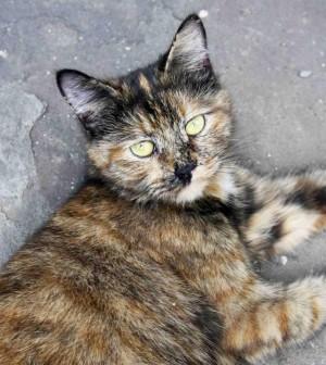 Выброшенная на берег острова Губернатора трёхцветная кошка вскоре обретёт своё имя