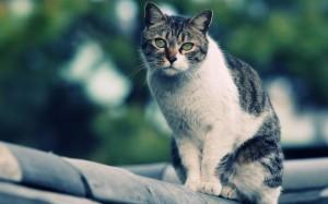 Спасение кошки влетело в копеечку
