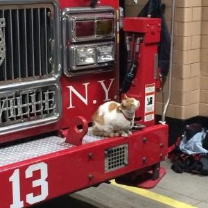 Кот Стичес (Stiches) спас своего хозяина