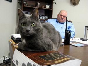 Офицер спас кошку