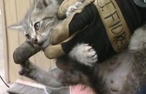 Пожарные разобрали автомобиль, чтобы спасти котёнка