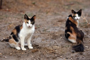 Местная группа получила грант на стерилизацию бродячих кошек