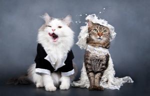 День Свадьбы... Кошачьей Свадьбы!