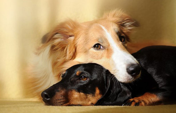 если у вашей собаки эпилепсия, займитесь режимом содержания собаки