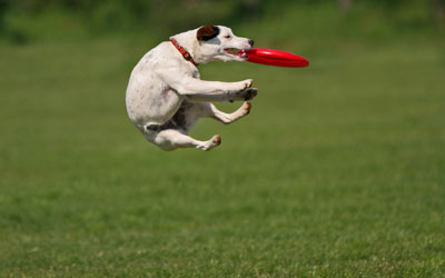 собака на лету ловит летающую тарелку
