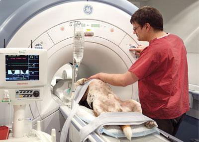 собаке после операции делают МРТ