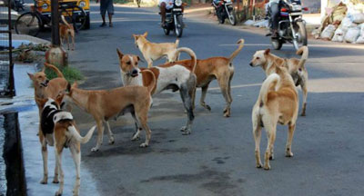 не смотря на все меры предосторожности из за бешенства животных до сих пор умирают люди