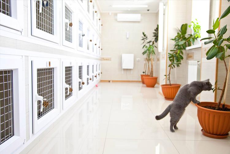 зостиница для животных изнутри