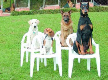 собаки сидят на стульях