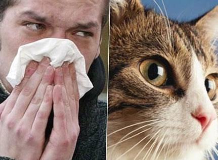 у людей имеющих аллергию на кошек, контакт с кошкой вызывает раздражение слизистых оболочек