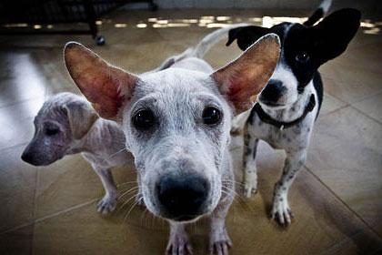 бездомные собаки крупным планом