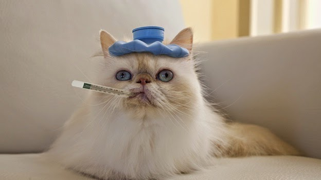 когда котенок болен