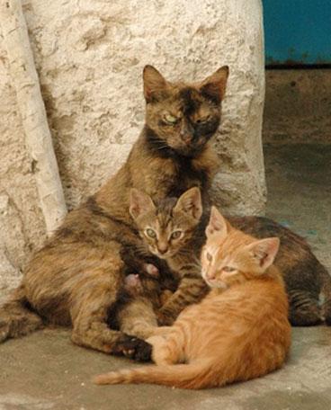 кошка с маститом и котята