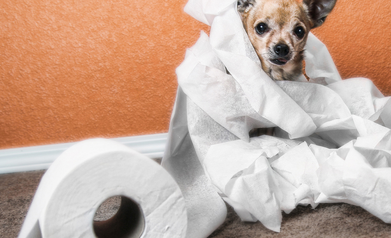 диагностика диареи у собак