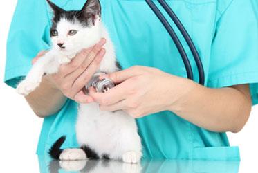 ветеринар  держит на руках кошку