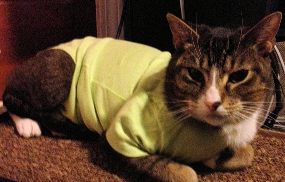 кошка после операции в попоне