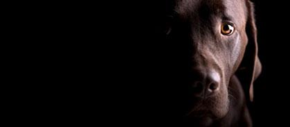 голова собаки на черном фоне