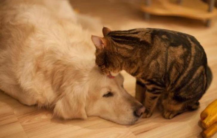 кошка облизывает собаку