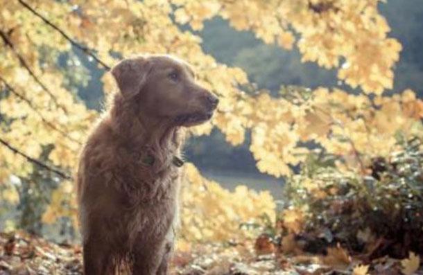 собака в лесу осенью