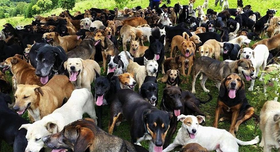 животных много, ветеринаров хороших гораздо меньше