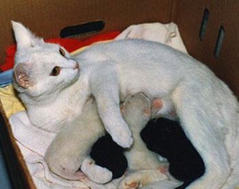 кошка с маститом кормит котят