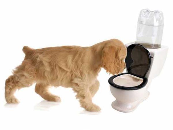 почему у собак возникает понос?