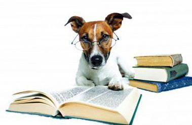 собака с книгами в очках