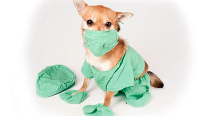 маленькая собака в больничном халате