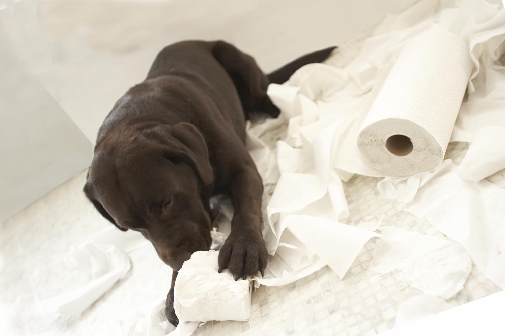 лечение диареи у псов