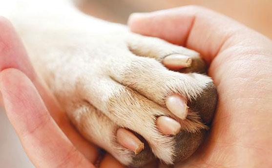 человек держит в руке лапу собаки