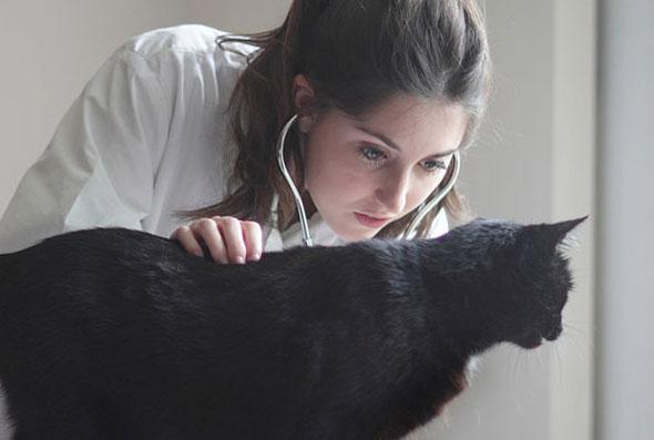 Предварительный осмотр обязателен, кошка должна быть полностью здорова.