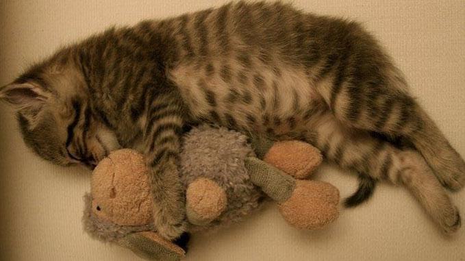 Не забывайте, что после операции коту нужен отдых.