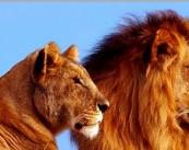 """Ветеринарная клиника """" Король лев"""""""