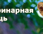 Центр скорой ветеринарной помощи, ИП Яшинков О.Б.