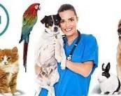 """Ветеринарная клиника """"Винни"""""""