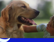 Ветеринарная клиника «Веда»