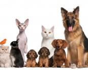 Ветеринарная клиника Омега-Вет
