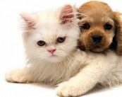 ЗОО-ОТЕЛЬ DOG 4 CATS