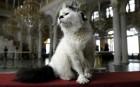 Обитающие в Эрмитаже коты
