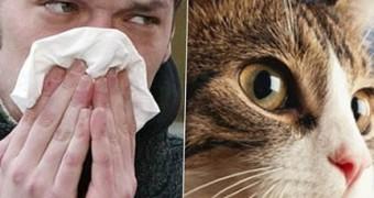 Аллергия на кошек у взрослых